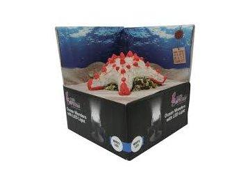 HYDOR H2shOw Ocean Wonders Hvězdice + bílé LED 12 x 12 x 4 cm hvězdice dekorace do akvária