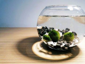 SET Řasokoule a akvarijní koule 2,5 l s černo-bílým štěrkem dekorace, střední řasokoule s kamínky černými a bílými dárek tři řasokoule Habeo.cz