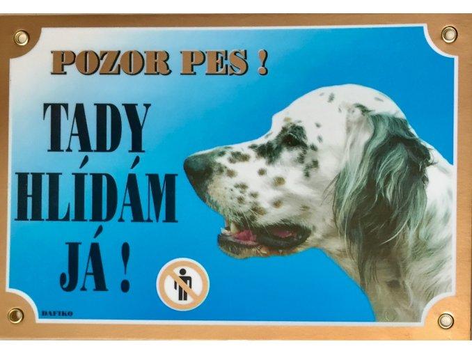 Barevná cedulka Pozor pes Setr bílý