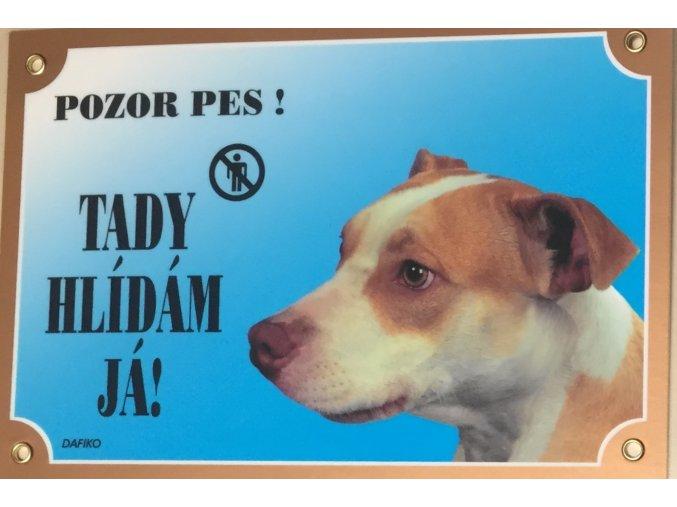 Barevná cedulka Pozor pes Pitbullterier