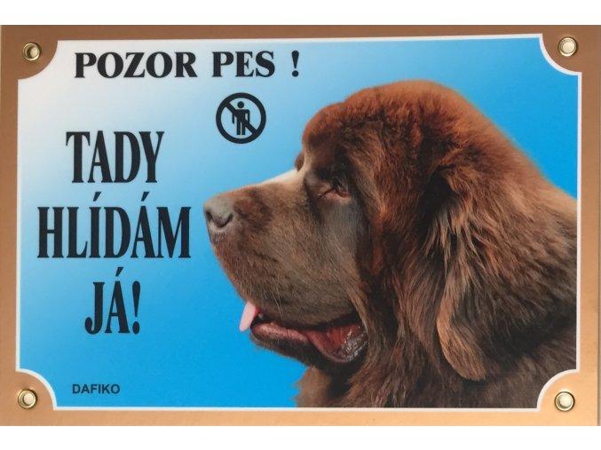 Barevná cedulka Pozor pes Novofundlanský pes hnědý