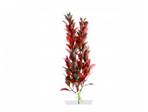 18321 red ludwigia 18 21 cm 1