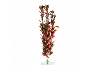 18322 red ludwigia 25 28 cm 1