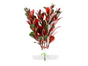 18320 red ludwigia 13 16 cm 1
