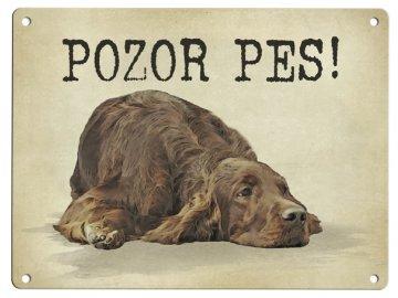Irský setr- Pozor pes