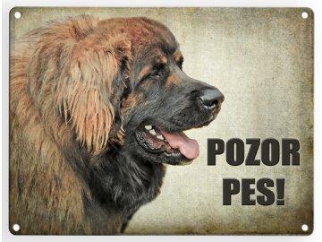 Leonberger- pozor pes 3