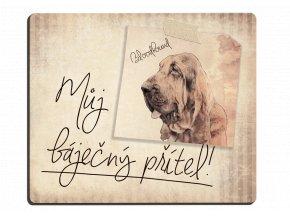 Bloodhound -můj přítel