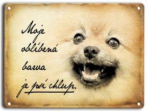 Německý špic-psí chlup