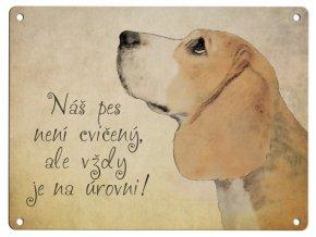 Bígl-náš pes není cvičený