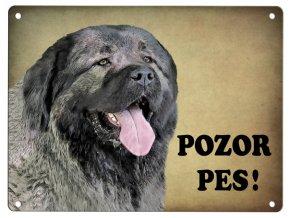 Kavkazský ovčák- Pozor pes