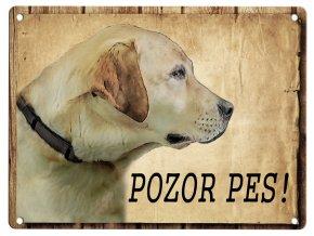 Světlý labrador - Pozor pes
