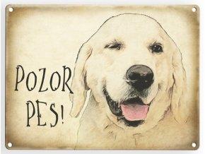 Zlatý retrívr- pozor pes