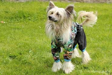 Fotogalerie 3/5 – pláštěnky pro psy