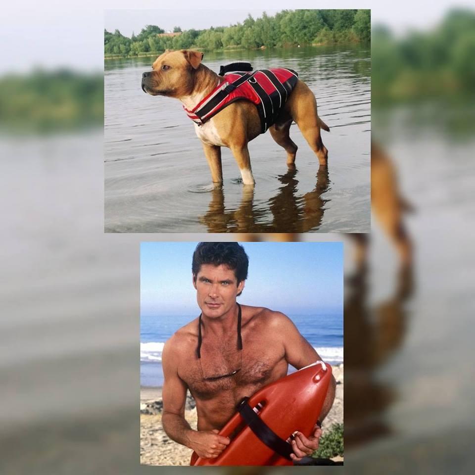 Plovací vesty pro psy