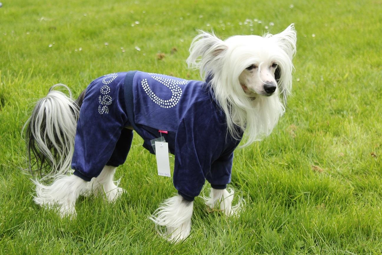 Oblečky pro psy – lehké overaly