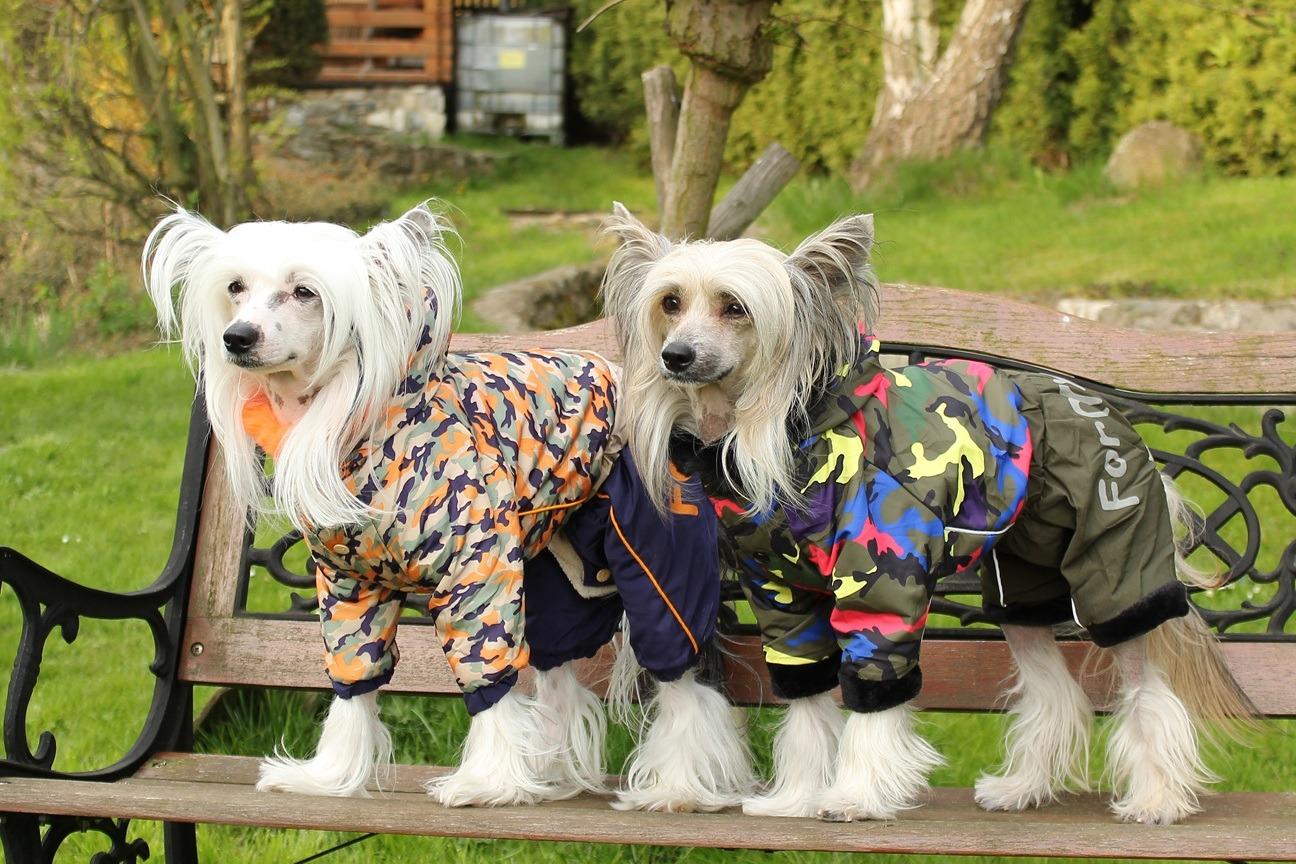 Oblečky pro psy – ochrana před chladem