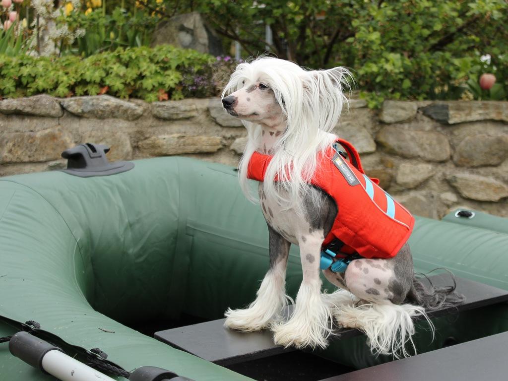 Plovací vesta pro psy RUFFWEAR