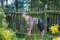 Obleček pro fenky malých až středních plemen – pláštěnka od For My Dogs. Zapínání na druky na břiše, hladká podšívka, barva černá s barevným potiskem (2)