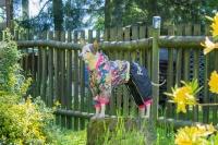 Obleček pro fenky malých až středních plemen – pláštěnka od For My Dogs. Zapínání na druky na břiše, hladká podšívka, barva černá s barevným potiskem (3)