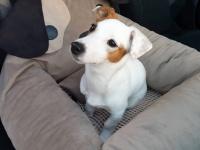 FOTO zákazníků. Autosedačka pro psy – pelíšek pro pohodlné cestování a ochranu autosedadel před psími chlupy, nečistotami a poškozením. (3)