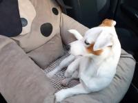 FOTO zákazníků. Autosedačka pro psy – pelíšek pro pohodlné cestování a ochranu autosedadel před psími chlupy, nečistotami a poškozením. (4)