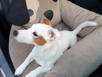 FOTO zákazníků. Autosedačka pro psy – pelíšek pro pohodlné cestování a ochranu autosedadel před psími chlupy, nečistotami a poškozením. (5)