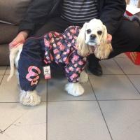 Oblečky pro psy i fenky – foto zákazníků. 2
