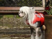 Funkční plovací vesta pro psy RUFFWEAR s konstrukcí promyšlenou do nejmenších detailů – reflexní prvky, očko na vodítko, rukojeť pro vyzvednutí psa z vody. (2)