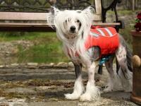 Funkční plovací vesta pro psy RUFFWEAR s konstrukcí promyšlenou do nejmenších detailů – reflexní prvky, očko na vodítko, rukojeť pro vyzvednutí psa z vody. (3)