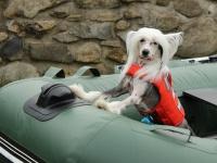 Funkční plovací vesta pro psy RUFFWEAR s konstrukcí promyšlenou do nejmenších detailů – reflexní prvky, očko na vodítko, rukojeť pro vyzvednutí psa z vody. (4)