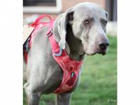 Ergonomický nastavitelný postroj pro psy HURTTA z měkkého prodyšného polyesteru se zvýšenou odolností vůči povětrnostním vlivům. Barva červená, vzor Coral CAMO. (FOTO 10)