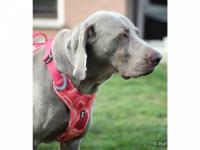 Ergonomický nastavitelný postroj pro psy HURTTA z měkkého prodyšného polyesteru se zvýšenou odolností vůči povětrnostním vlivům. Barva červená, vzor Coral CAMO. (FOTO 11)