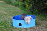 Bazén pro psy z extra odolného materiálu. Rozložení během několika vteřin, neklouzavé dno, odvodňovací ventil. Rozměry 60 × 20 cm. (2)