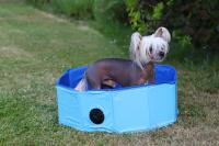 Bazén pro psy z extra odolného materiálu. Rozložení během několika vteřin, neklouzavé dno, odvodňovací ventil. Rozměry 60 × 20 cm. (3)
