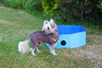 Bazén pro psy z extra odolného materiálu. Rozložení během několika vteřin, neklouzavé dno, odvodňovací ventil. Rozměry 60 × 20 cm.