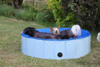 Bazén pro psy z odolného materiálu. Rozložení během několika vteřin, neklouzavé dno, odvodňovací ventil. Rozměry 120 × 30 cm. (2)