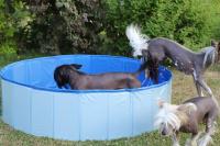 Bazén pro psy z odolného materiálu. Rozložení během několika vteřin, neklouzavé dno, odvodňovací ventil. Rozměry 120 × 30 cm. (3)