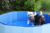 Bazén pro psy z odolného materiálu. Rozložení během několika vteřin, neklouzavé dno, odvodňovací ventil. Rozměry 120 × 30 cm. (7)