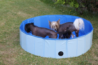 Bazén pro psy z odolného materiálu. Rozložení během několika vteřin, neklouzavé dno, odvodňovací ventil. Rozměry 120 × 30 cm.