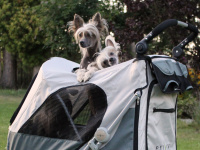 Velký kočárek pro psy s 38cm kolečky a nosností až 45 kg patřící k největším kočárkům pro psy na trhu. Rozměry kabiny 85 × 55 × 60 cm, možnost připevnění upravovacího stolku. FOTO 2