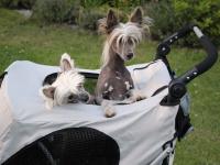 Velký kočárek pro psy s 38cm kolečky a nosností až 45 kg patřící k největším kočárkům pro psy na trhu. Rozměry kabiny 85 × 55 × 60 cm, možnost připevnění upravovacího stolku. FOTO 7