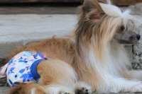 FOTO – Bavlněné hárací kalhotky pro fenky od For My Dogs (2)