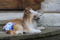 FOTO – Bavlněné hárací kalhotky pro fenky od For My Dogs (3)