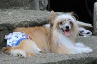 FOTO – Bavlněné hárací kalhotky pro fenky od For My Dogs (4)