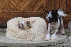 FOTO – Huňatý pelíšek pro psy i kočky od I LOVE PETS – měkké bočnice, vyjímatelný polštář, materiál luxusní soft fleece s dlouhým vlasem (4).