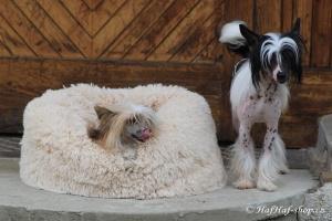 FOTO – Huňatý pelíšek pro psy i kočky od I LOVE PETS – měkké bočnice, vyjímatelný polštář, materiál luxusní soft fleece s dlouhým vlasem.
