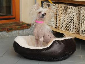 Jak vybrat psí pelíšek: výběr psího pelíšku nepodceňujte a vezměte v úvahu všechny faktory: velikost, tvar, věk a zdravotní stav vašeho čtyřnohého kamaráda…