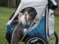 Kočárek pro psy s 38cm kolečky a nosností až 30 kg. Rozměry kabiny 72 × 45 × 60 cm, možnost připevnění upravovacího stolku. Barva modro-šedá. FOTO 6