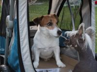 Kočárek pro psy s 38cm kolečky a nosností až 30 kg. Rozměry kabiny 72 × 45 × 60 cm, možnost připevnění upravovacího stolku. Barva modro-šedá. FOTO