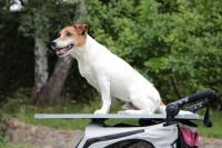 PetStro SAFARI – kočárek pro psy do 30 kg, tmavě růžový (19)